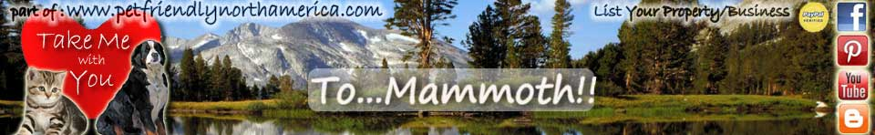 Pet Friendly Mammoth California Having Fun Things To Do